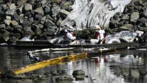 Derrame de petróleo causó gran impacto en el ecosistema