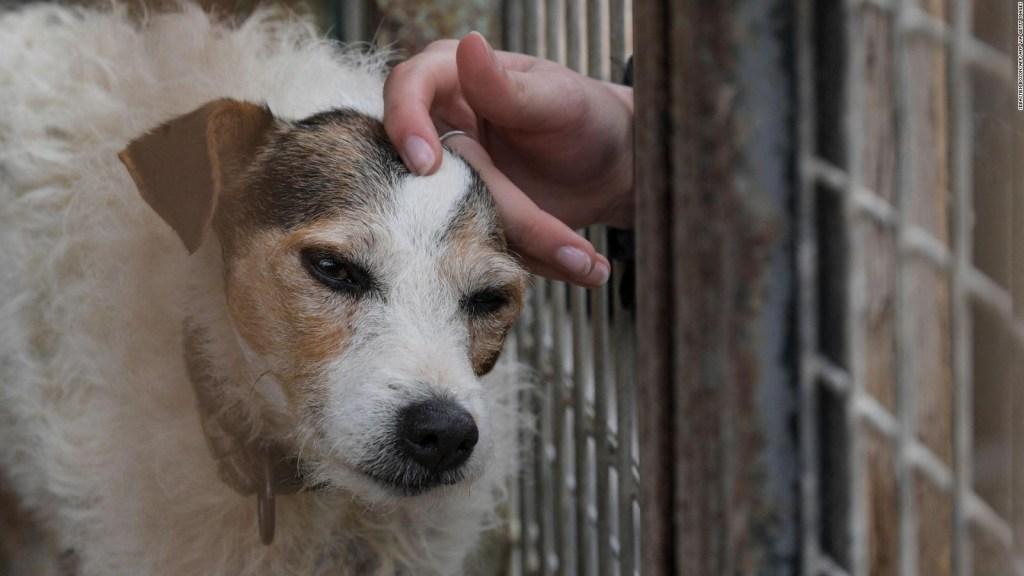 La Palma: Así esperan las mascotas por sus dueños