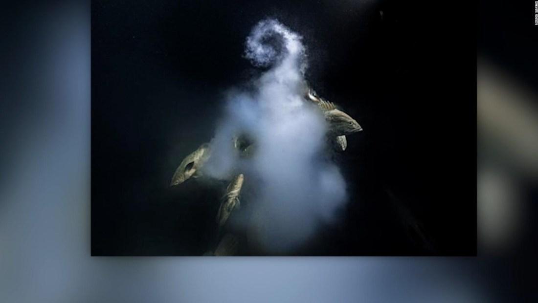 Imagen subacuática gana premio fotográfico