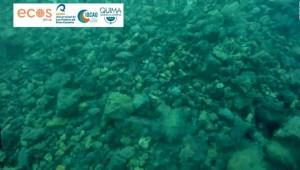 Primeras imágenes submarinas de lava de volcán español