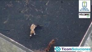 Dron alimenta a perros atrapados en jardín rodeado de lava