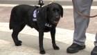 Mira al agente más nuevo de la policía del Capitolio en acción