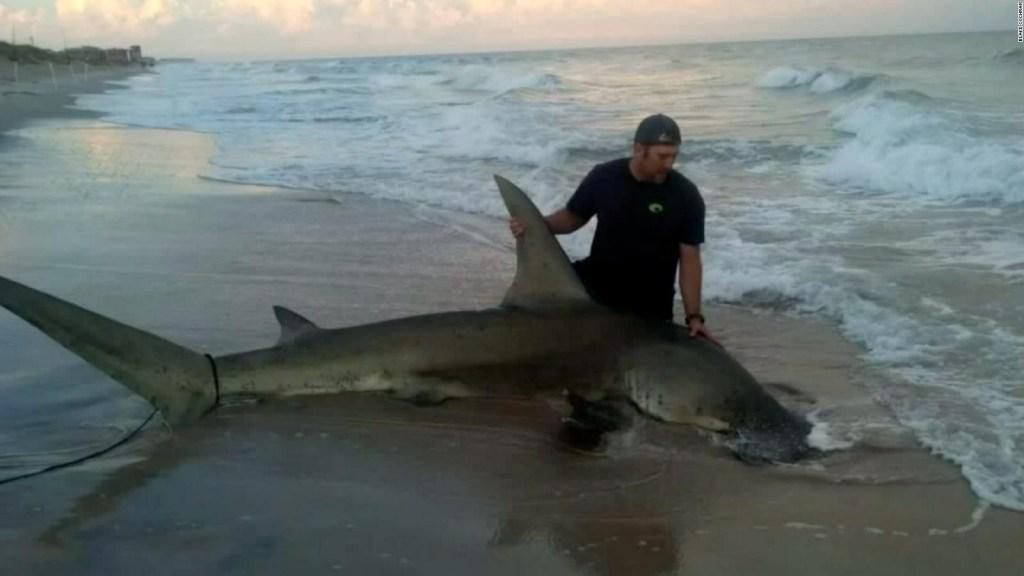 Capturó tiburón de 4 metros y esto es lo que hizo con él