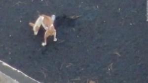 perros volcán Palma