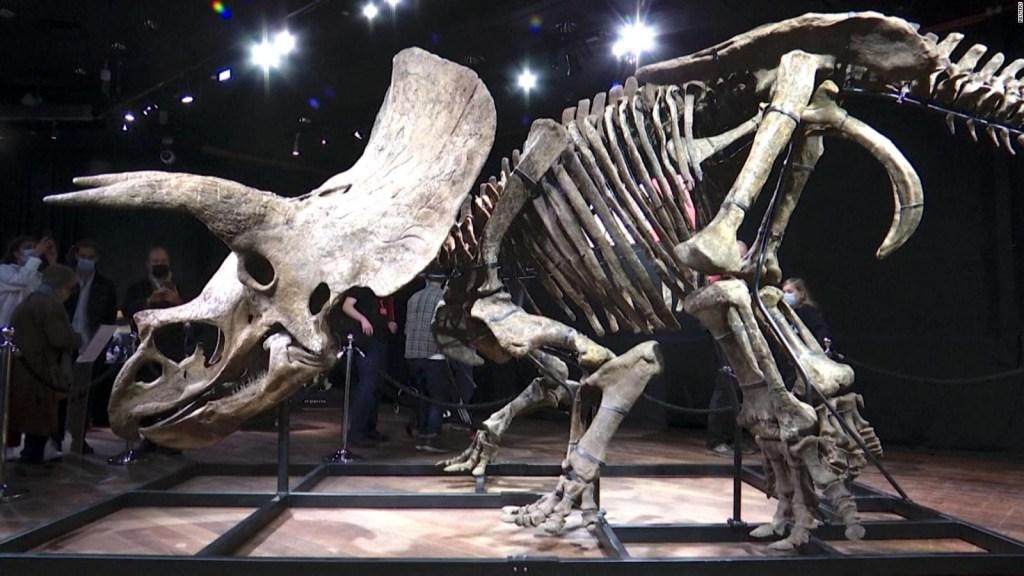 "Subastan fósil del dinosaurio triceratops ""Big John"""