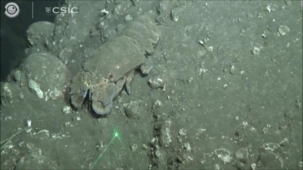 Así es el efecto del volcán en el ecosistema marino