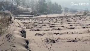 Los viñedos en La Palma son dañados por cenizas del volcán
