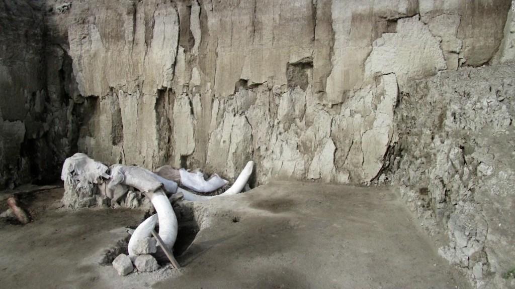 Los mamuts sobrevivieron más tiempo de lo que se creía