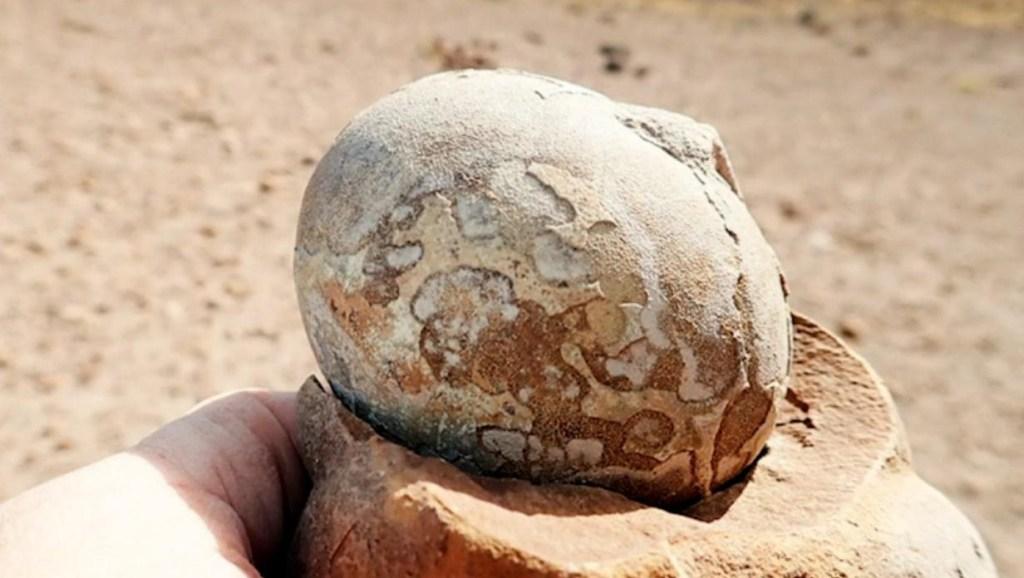 Gran hallazgo argentino: descubren huevos de dinosaurios