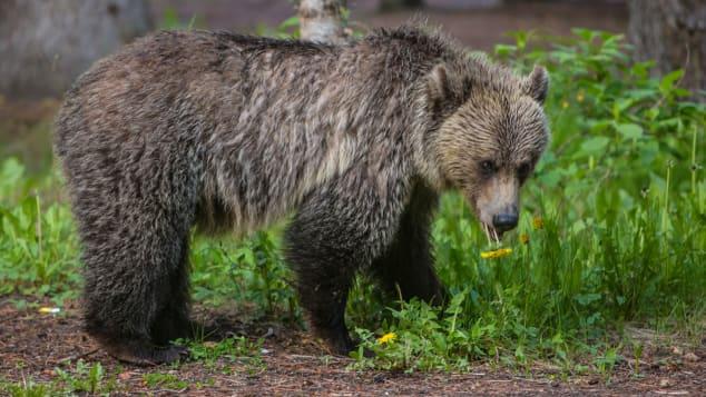 Te encuentras con un oso. Tu próximo movimiento es muy importante. ¿Sabes qué hacer?