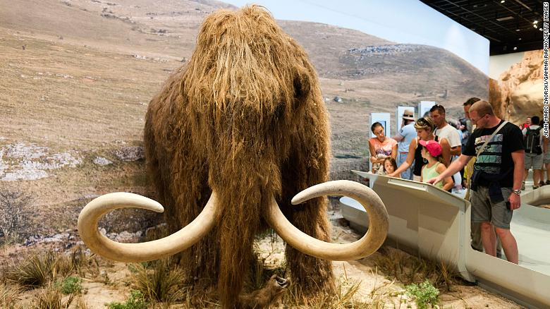 Revivir el mamut lanudo ¿para qué? La explicación de los líderes del proyecto y las objeciones de otros científicos